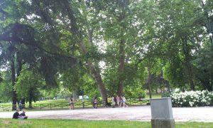 Parco Sempione08